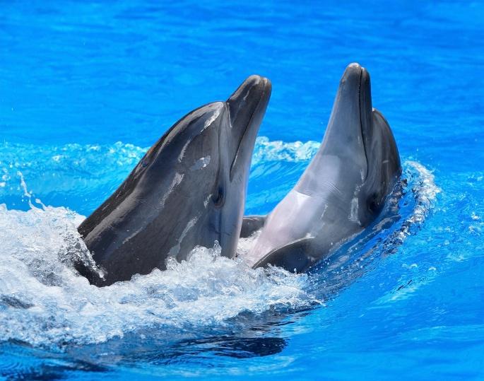 Дельфины. Dolphins (40 обоев)