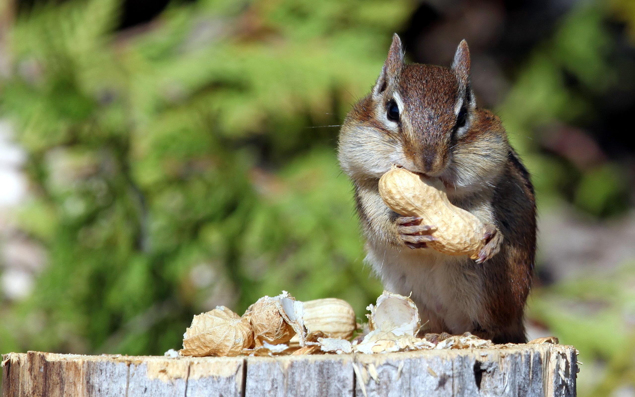 парни стараются дикие животные поедающие плоды фото хочу рассказать вам