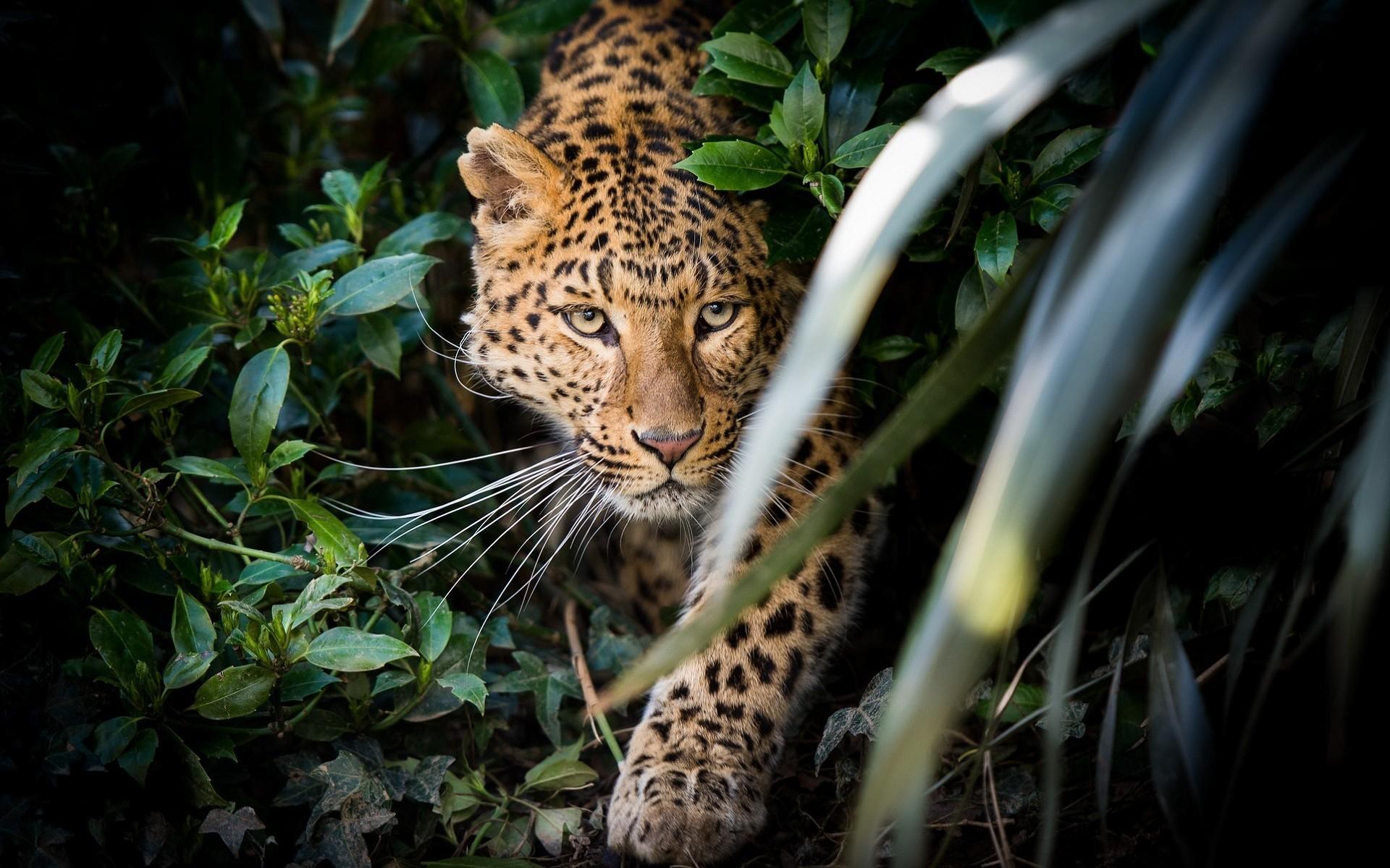 красивые картинки с дикими хищными животными лучше небольшие