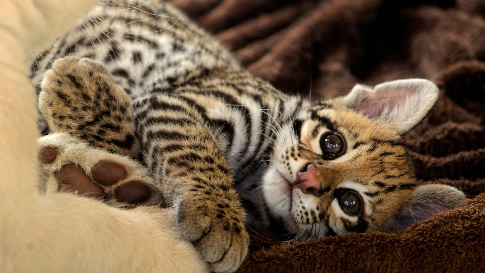 дикие милые животные фото вид