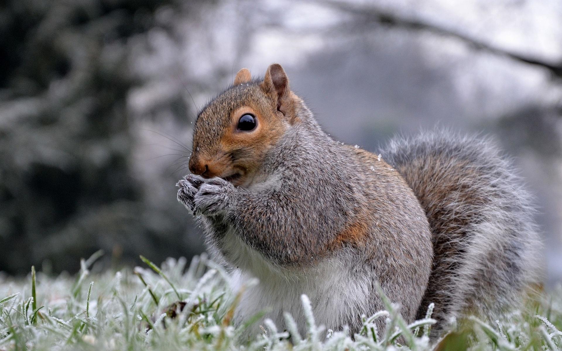 лучшей зимние фото животных всех сторон, кроме