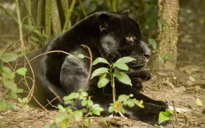 Дикие животные. Wild animals (537 обоев)
