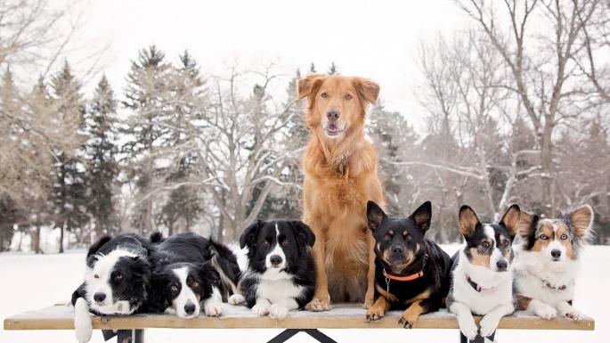 Зимние животные. Winter animals (100 обоев)