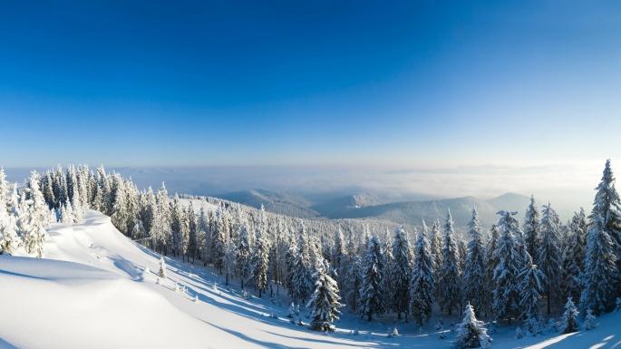 Зимний лес. Winter Wood