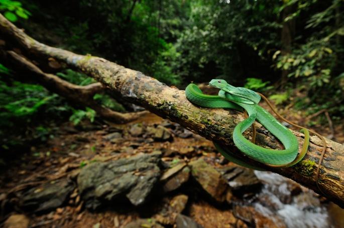 Змеи. Snakes (48 обоев)