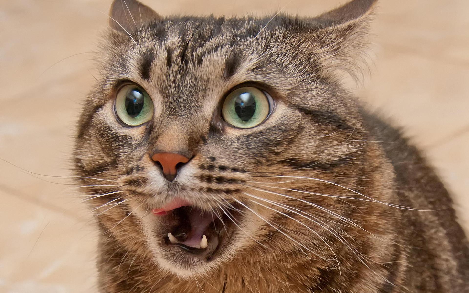 смешные коты смотреть фото том