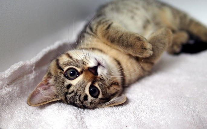 Коты. Cats (565 обоев)