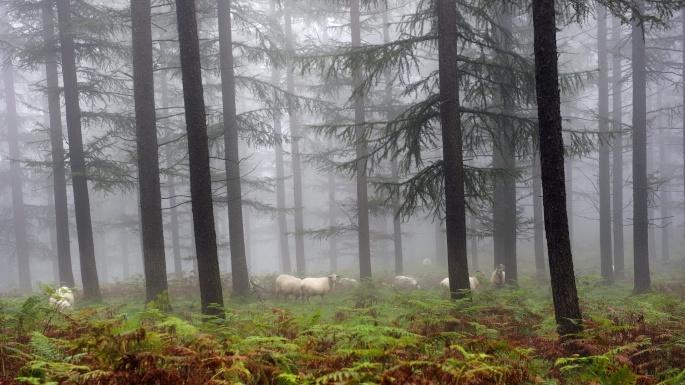 Лес. Woods (100 обоев)