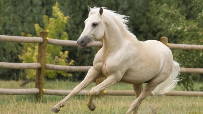 Лошади. Horses (345 обоев)