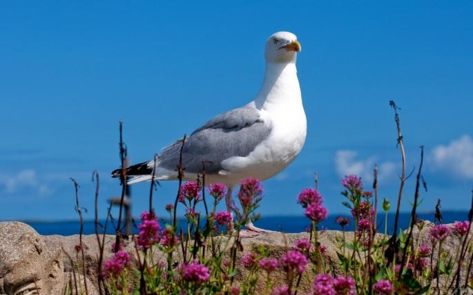 Морские птицы. Seabirds (60 обоев)