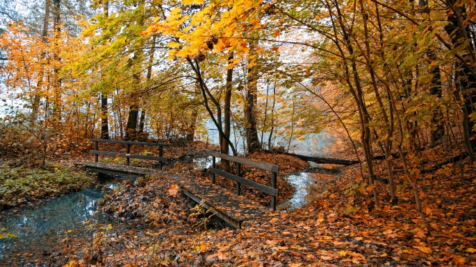 Осень. Autumn (363 обоев)