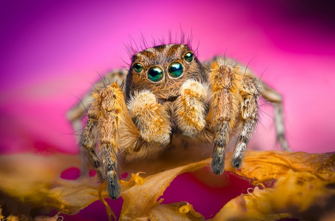 Пауки. Spiders (46 обоев)