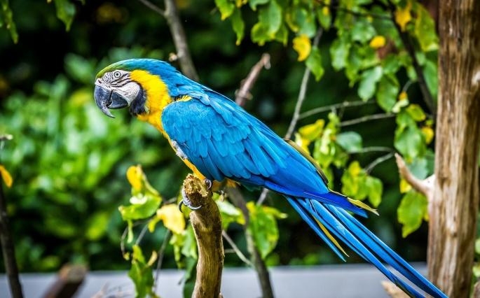 Попугаи. Parrots (37 обоев)