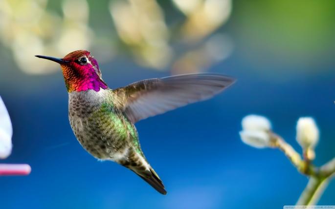 Птицы. Birds (309 обоев)